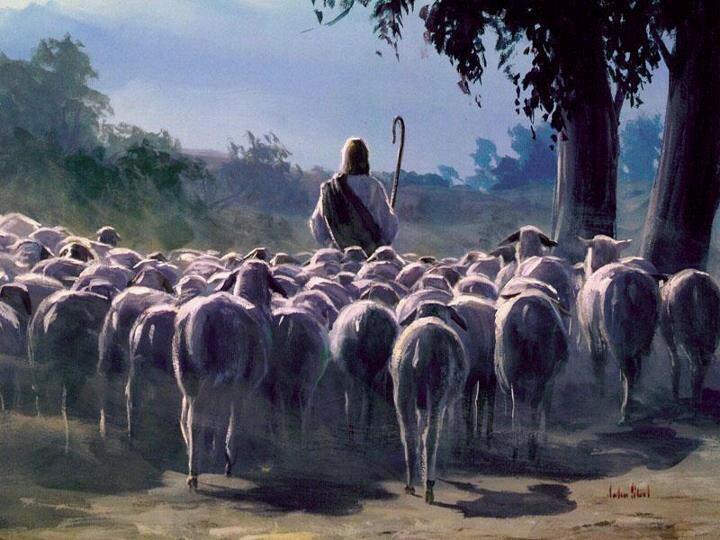 shepherd photo from kingdomvineyard.com