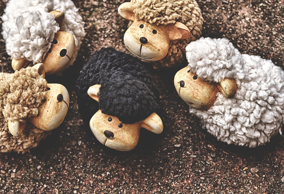 the-black-sheep-photo from Pixabey by Alexas