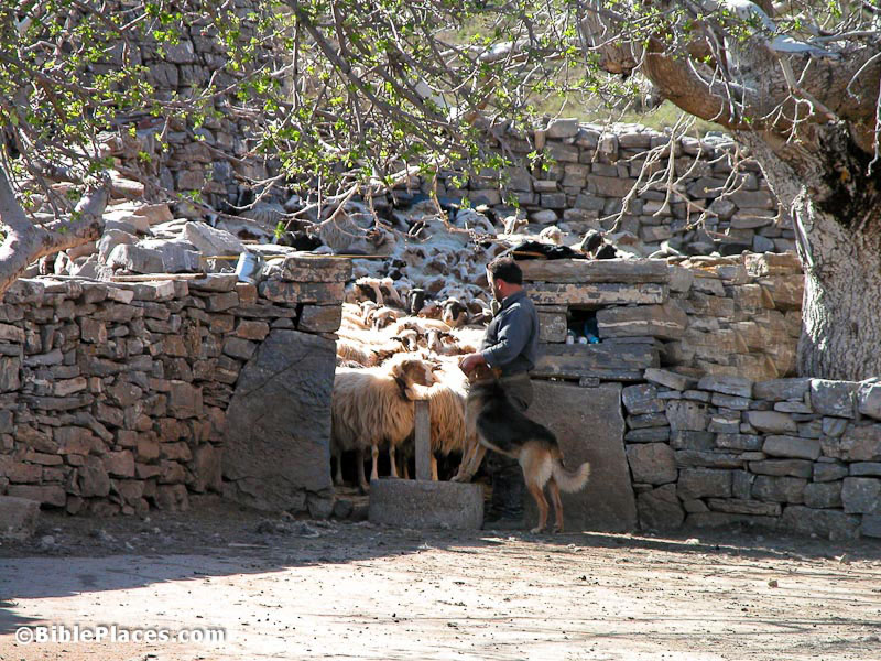 Shepherd-at-sheepfold Photo from Jerusalem Perspective