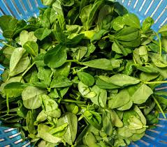 Methi Leaves Photo by Vegecravings