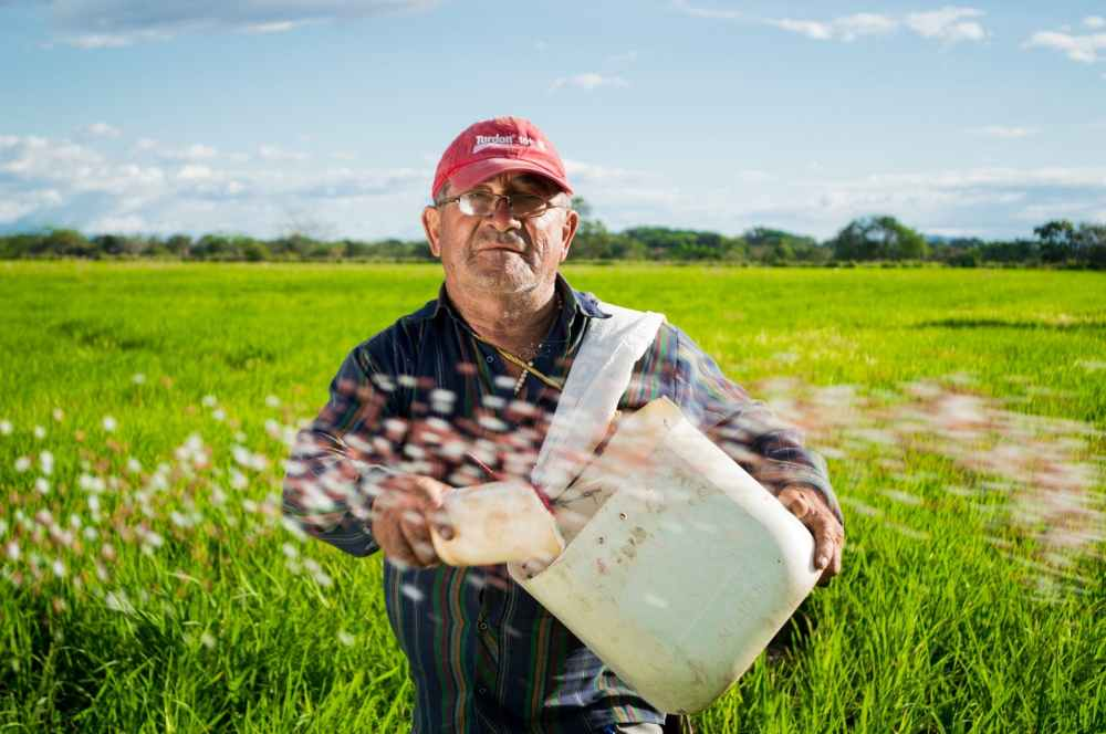man field rice colombia