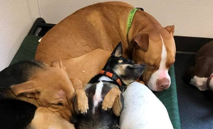 Sleeping dogs photo from Dog thrive