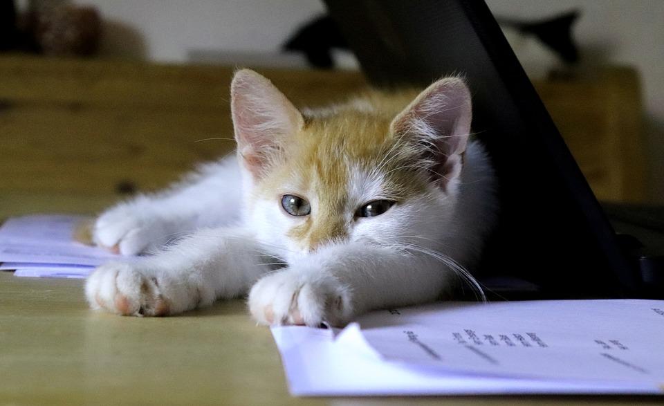 cat-3599255_960_720