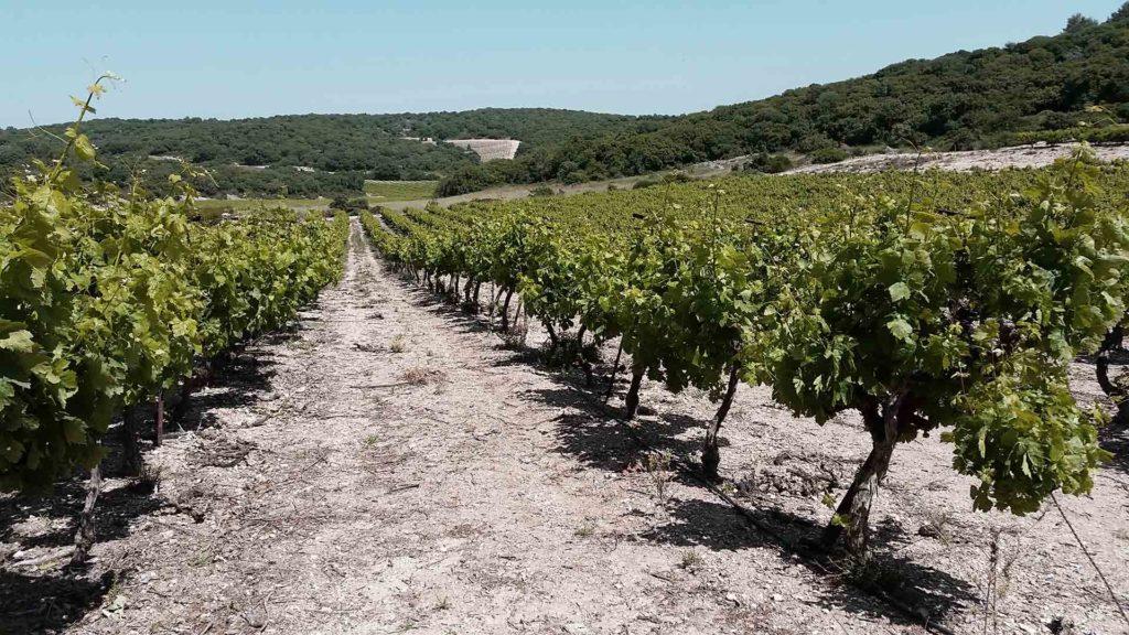 vineyard 3 winesofisrael.com