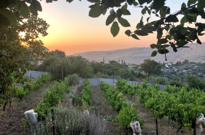vineyard 7 winemag.com