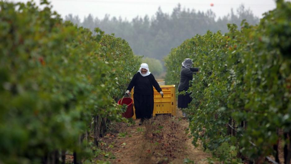 vineyard 2 winewarehouse.com